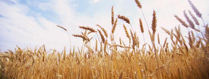Застраховка на земеделска продукция
